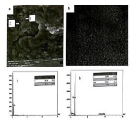 شکل 3-3 ، a ، تصویر میکروسکوپ الکترونی روبشی از آلیاژ منیزیم با 1.5 درصد کربن نانو تیوب و 7 درصد وزنی روی ، b :توزیع کربن نانو تیوب در زمینه منیزیمی  ،c ، نمودار EDS از نقطه یک ،d : نمودار EDS از نقطه 2.